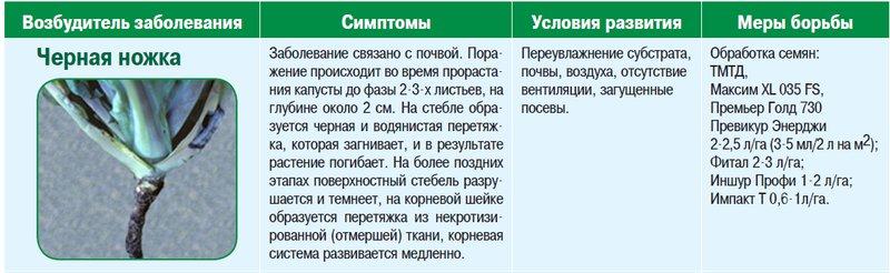 Вредители капусты: фото с описанием и способы борьбы с ними