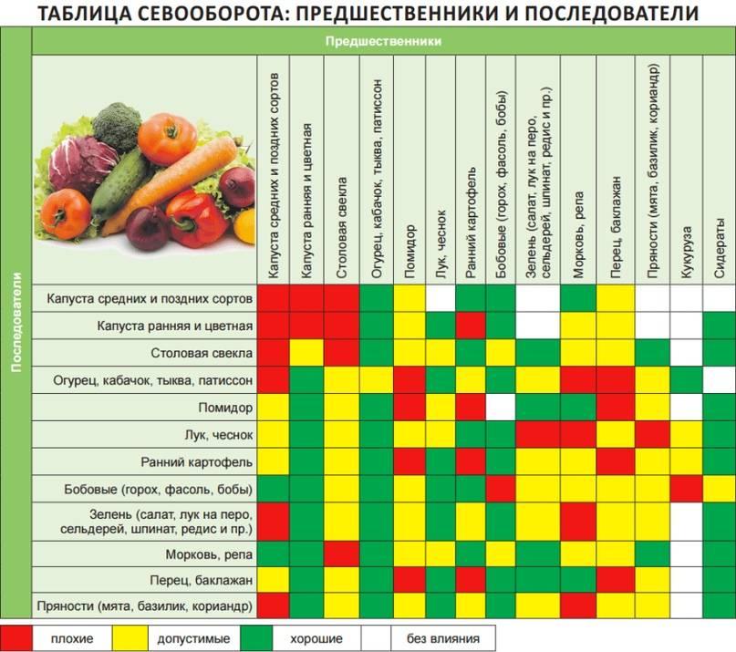 Что посадить после картофеля на следующий год, а что не следует