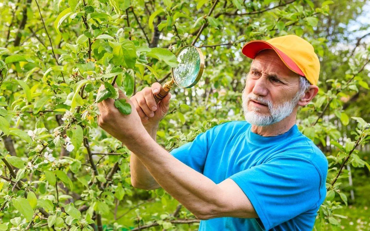 Биопрепараты для борьбы с вредителями и болезнями растений — floraprice.ru