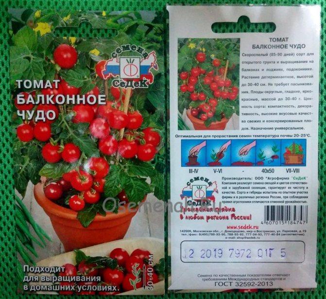 Томат балконное чудо – урожайный, вкусный, миниатюрный