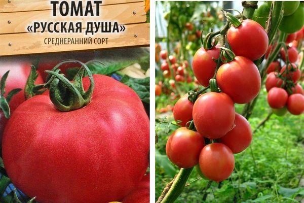 Описание томата Русская душа и культивирование сорта