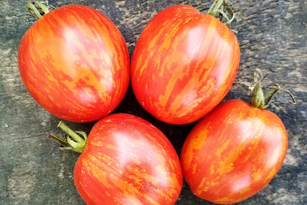 Характеристика сорта томатов пасхальное яйцо - журнал садовода ryazanameli.ru
