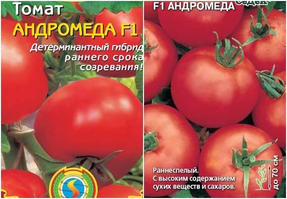 """Томат """"де барао розовый"""": характеристика и описание сорта, как выращивать помидоры русский фермер"""