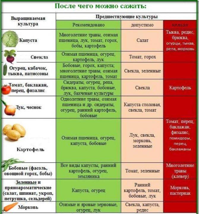 Что сажать после помидор на следующий год в открытый грунт, в теплице? после чего сажать помидоры