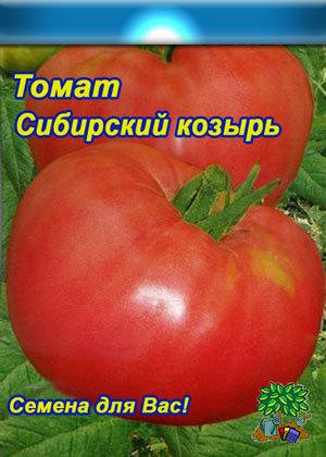Томат сибирский козырь описание сорта характеристика