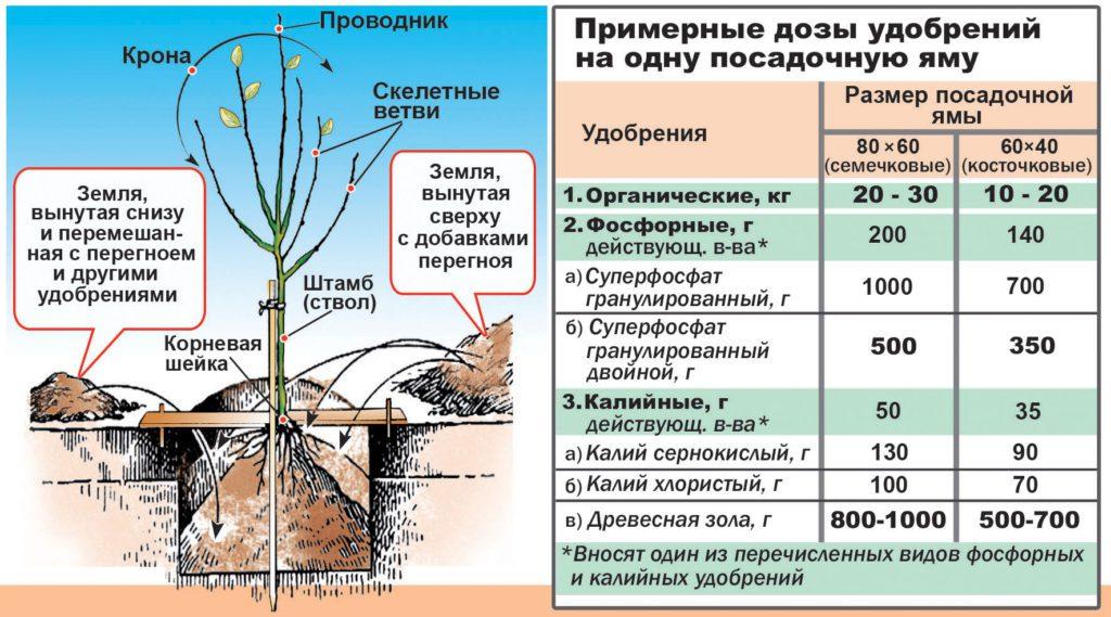 Уход за персиковым деревом весной и осенью: выращивание, полив, подкормка