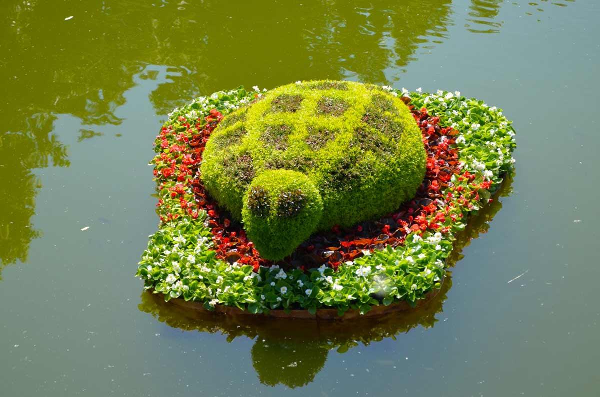 Как оформить декоративный водоём: выбираем растения для пруда