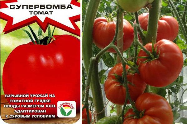 Описание томата Супербомба и его характеристики, выращивание