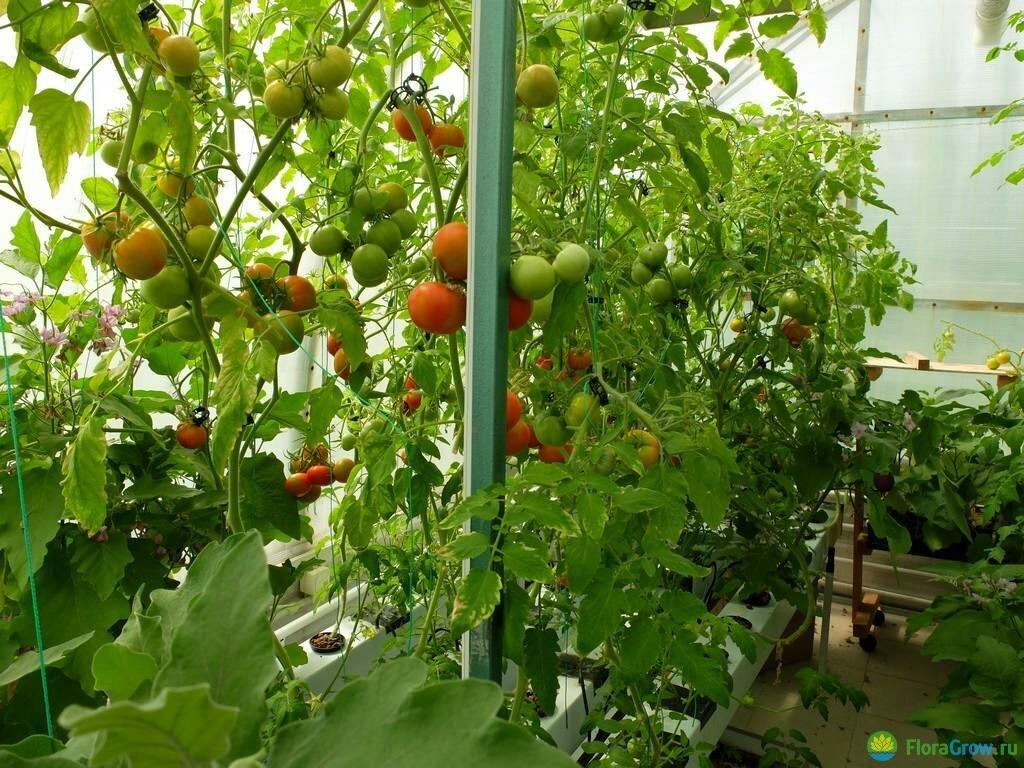 Технология выращивания огурцов и томатов на гидропонике
