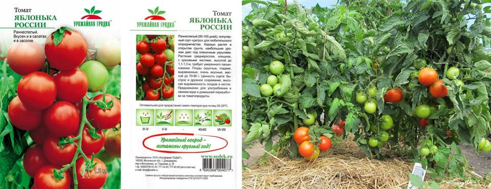 Легендарный гибрид – томат «инкас»: почему его так любят в разных странах, и чем он понравится именно вам