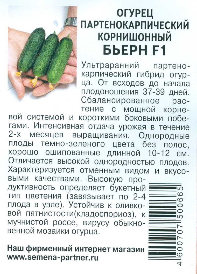 Бьерн огурец: описание, выращивание, уход, фото