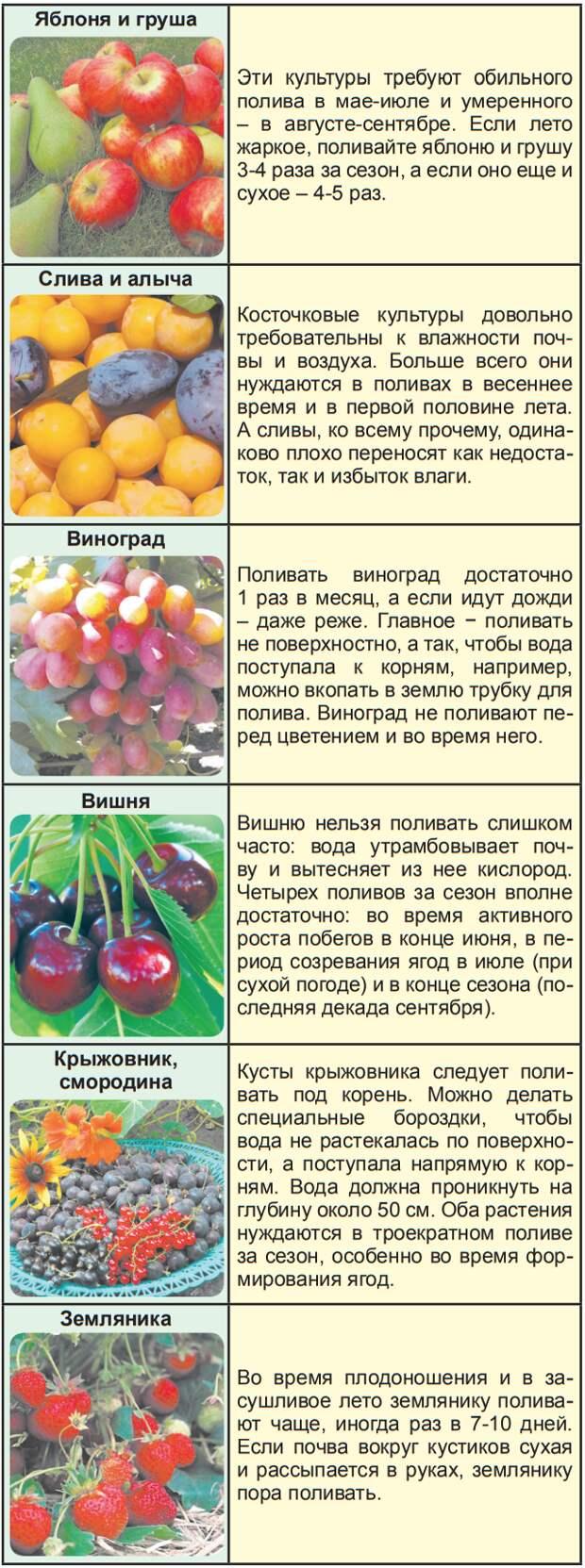 Как поливать и подкармливать виноград весной: инструкция для новичков