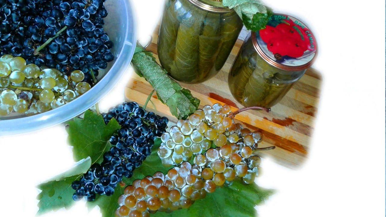 Рецепт приготовления заготовки виноградных листьев на зиму для долмы