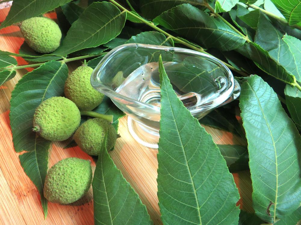 Не плодами едиными: целебные свойства листьев грецкого ореха