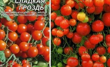 Томат виноградная гроздь: отзывы, фото, урожайность, посадка и уход