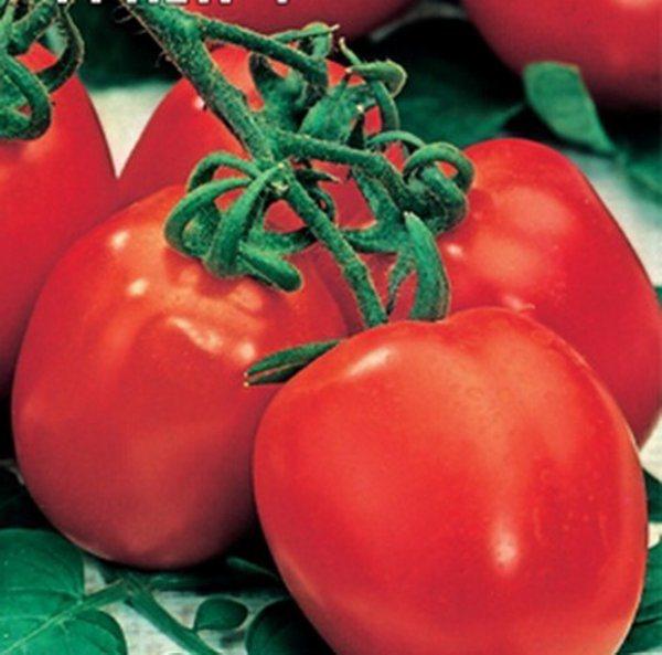 Томат царь петр. щедрые урожаи красивых и очень вкусных томатов — царь пётр: описание и характеристики сорта   зелёный сад