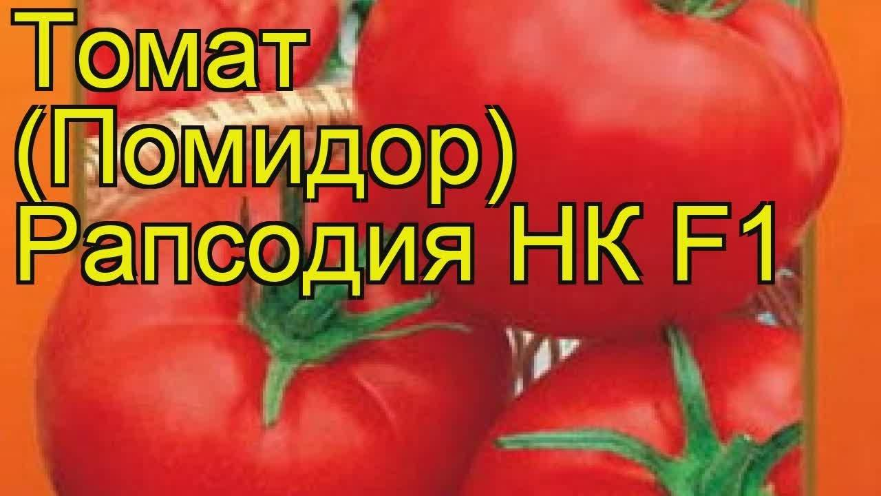 Томат «малиновый гигант»: характеристика и описание сорта, фото, урожайность, посадка и уход, отзывы