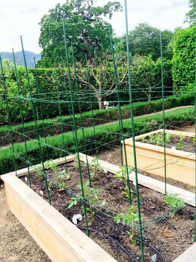 Шпалера для помидор - сам себе сад