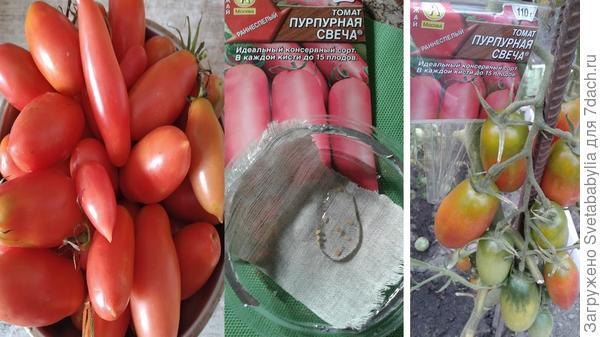 Томат пурпурное сердце: описание сорта, отзывы, фото, урожайность | tomatland.ru