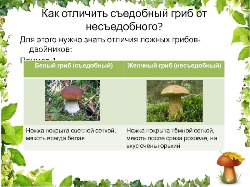 Царский гриб фото и описание рецепт приготовления