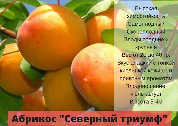 15 лучших сорта абрикоса для подмосковья - самые сладкие, вкусные, урожайные, морозоустойчивые, ранние, позднеспелые, самоплодные