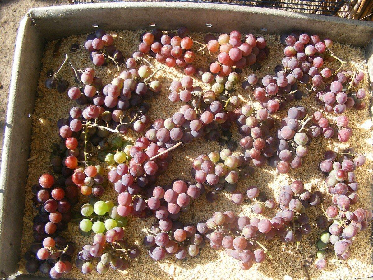 Где и как хранить виноград в домашних условиях