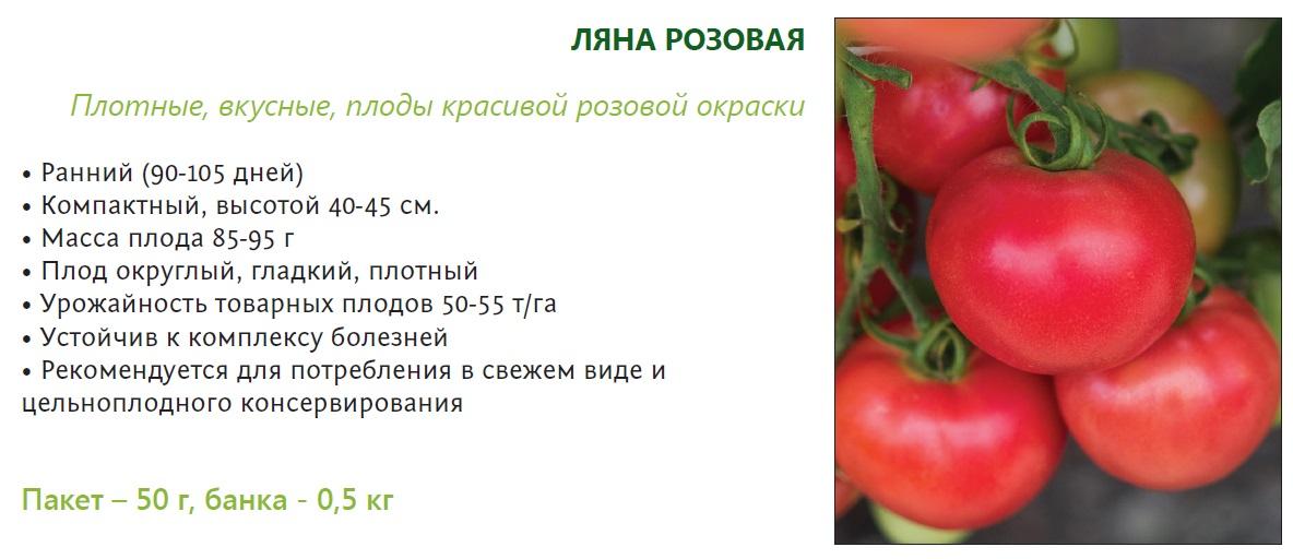 Томат ляна: описание сорта, отзывы, фото, урожайность | tomatland.ru