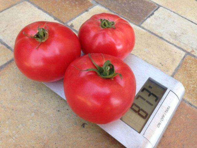 Описание томата Афен и выращивание вкусных гибридных помидоров