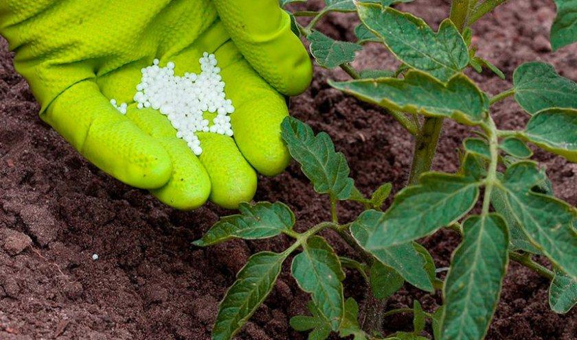 Выращивание роз в теплице как бизнес: технология высадки + ухода голландских сортов своими руками + видео