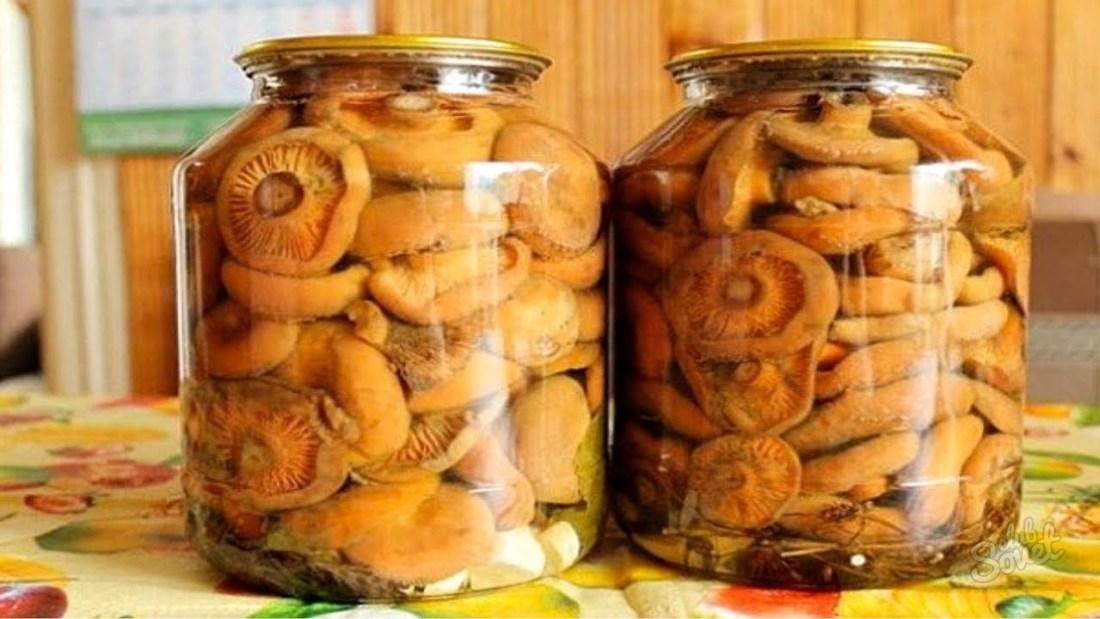 Засолка рыжиков в домашних условиях вкусно и быстро