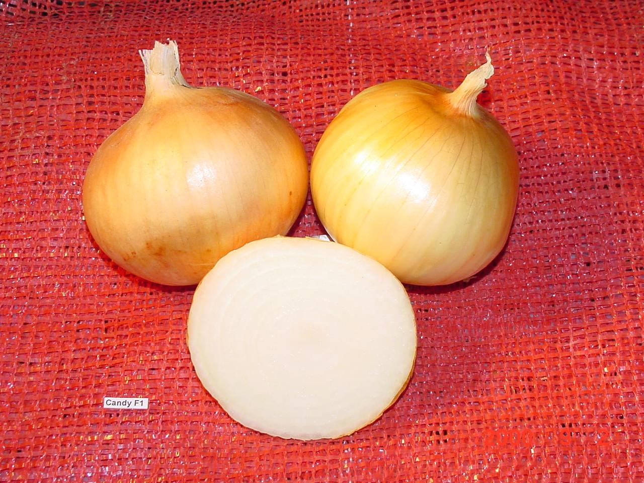 Семена лук репчатый f1 кэнди: описание сорта, фото. купить с доставкой или почтой россии.