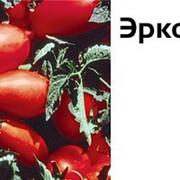 Описание томата Эрколь F1, его характеристика и урожайность