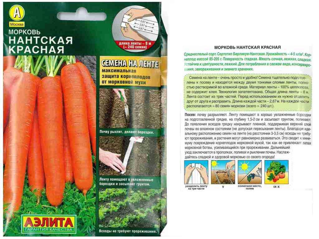 Морковь нантская 4: характеристика и описание сорта, срок созревания, фото растения и корнеплодов, как посадить овощ и собрать урожай
