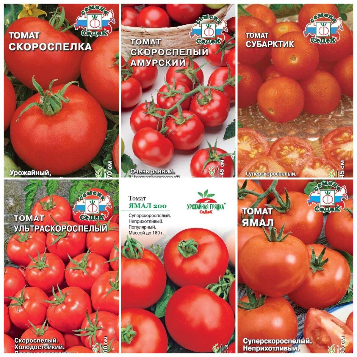 Безрассадный способ выращивания томатов: плюсы и минусы. какие сорта можно сеять сразу в грунт? - дзен дневник