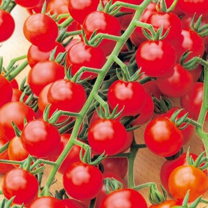 Черрипальчики: подробности агротехники авторского гибрида. описание миниатюрного томата и рекомендации по выращиванию