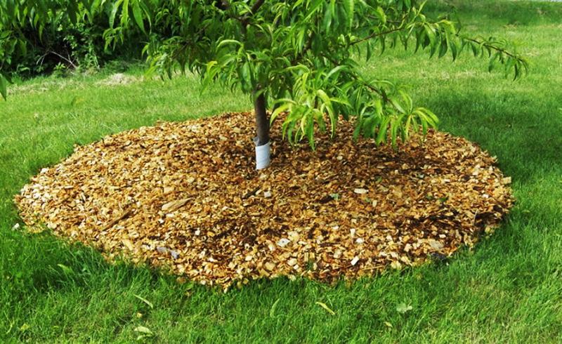 Материал для мульчирования почвы: какой лучше выбрать. где купить