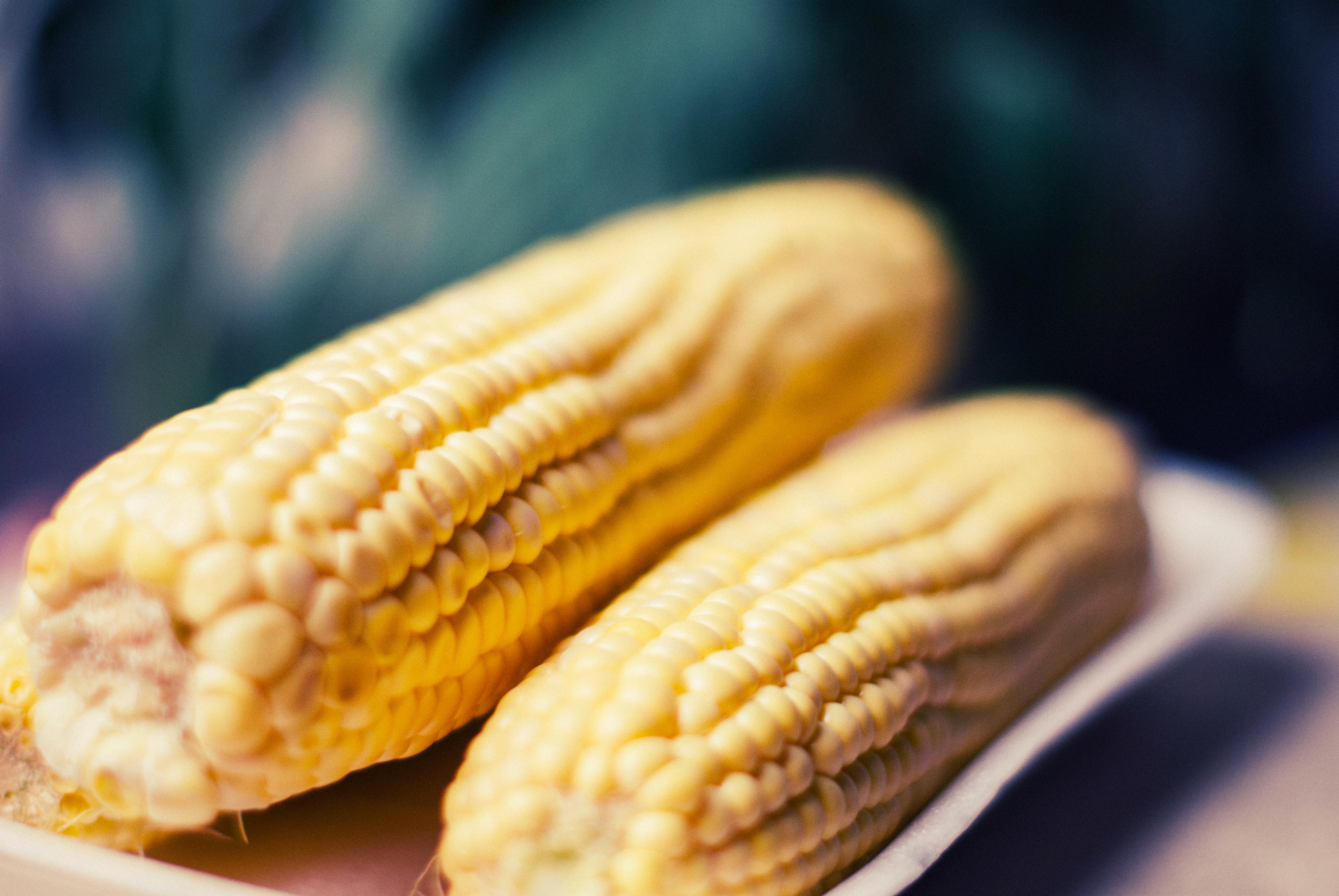 Кукуруза: польза и вред для организма человека, вареная
