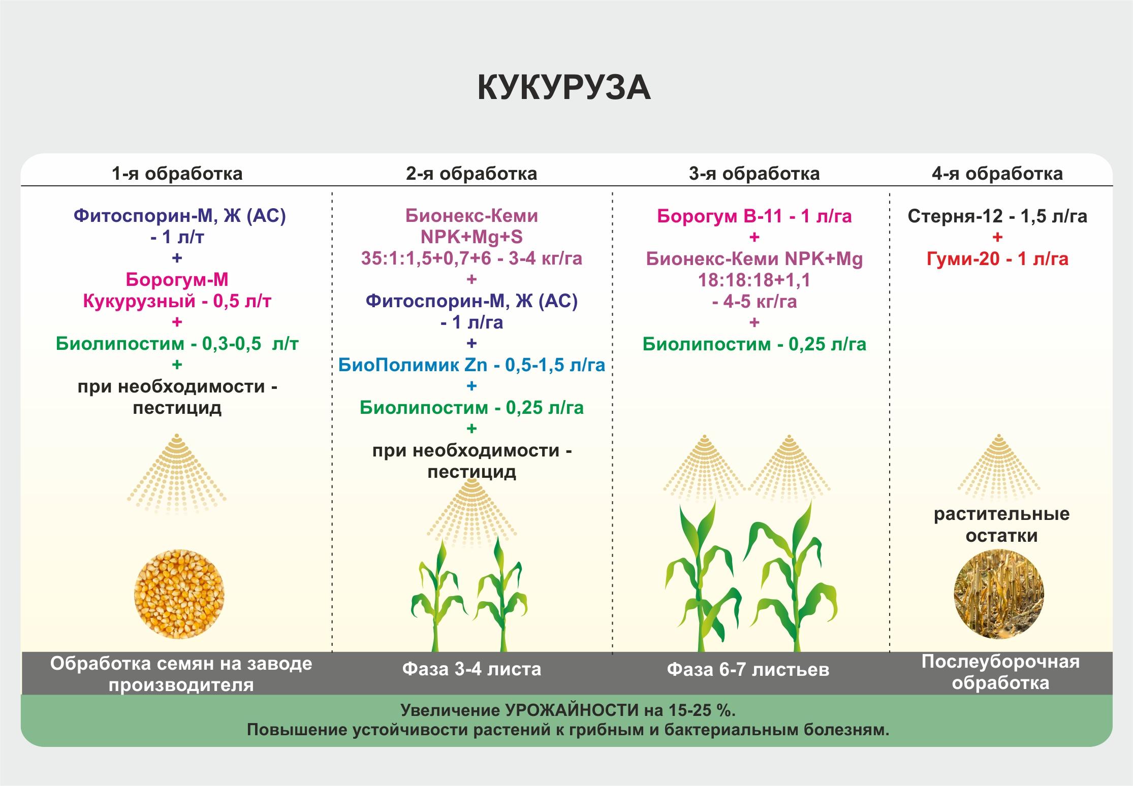Кукурузный силос: посев, урожайность кукурузы, заготовка