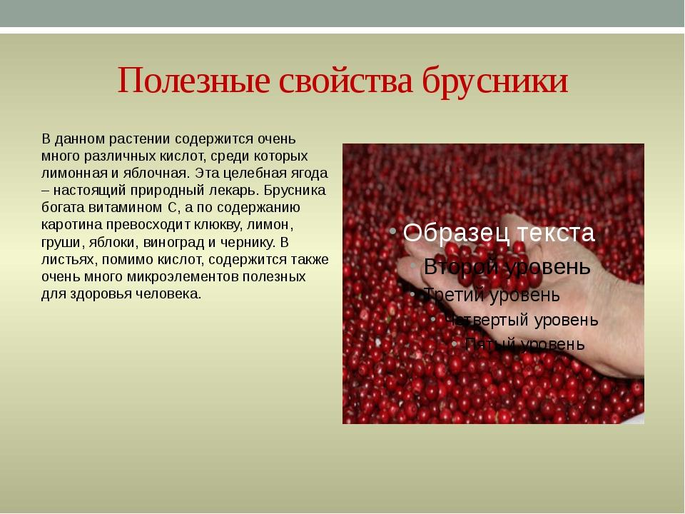 Целебная ягода молодости и бессмертия. что лечит брусника? | дары природы.су