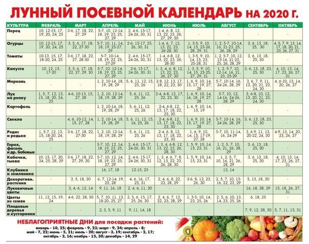 Благоприятные дни для посадки моркови в 2020 году по лунному календарю - сад и огород