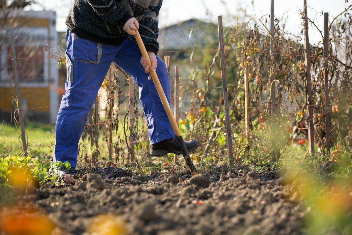 Вскопка огорода осенью и весной: правила ручной перекопки