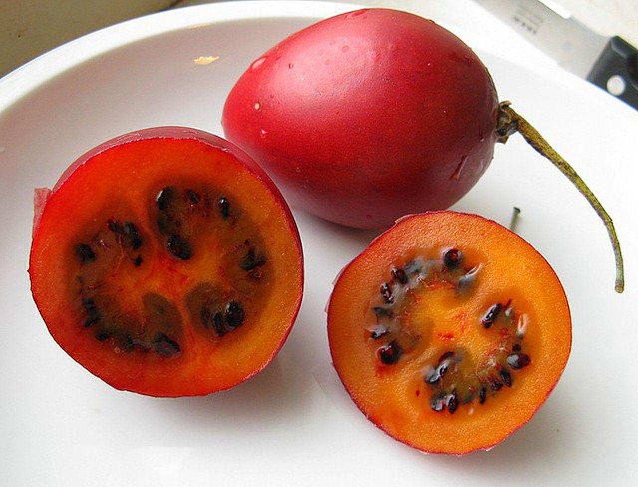 Томатное дерево спрут f1 или тамарилло: выращивание и уход в открытом грунте