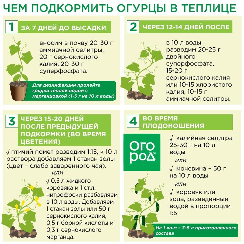 Удобрение огурцов - все об удобрениях для открытого грунта