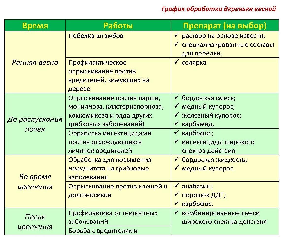 Обработка винограда весной от болезней и вредителей: основные мероприятия и эффективные средства