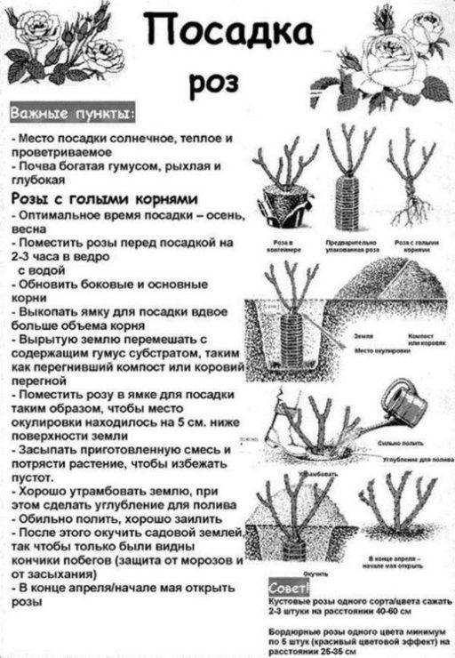 Правила покупки роз: что, где и по какой цене на supersadovnik.ru