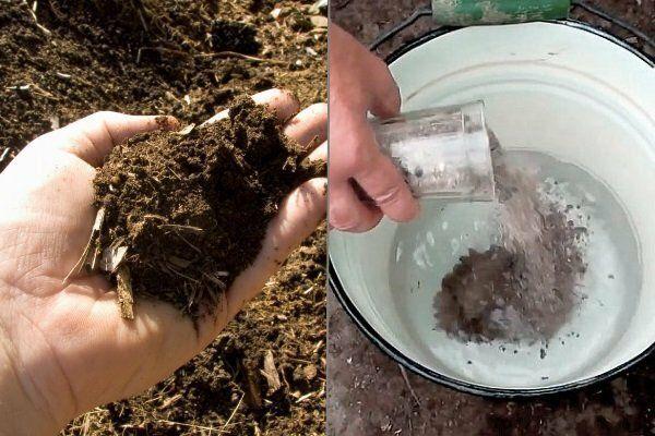 Подкормка золой: как приготовить зольный раствор для полива