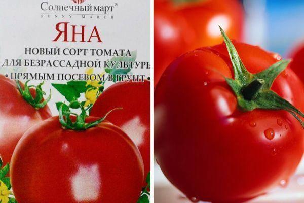 Томат пани яна: характеристика и описание сорта, урожайность с фото
