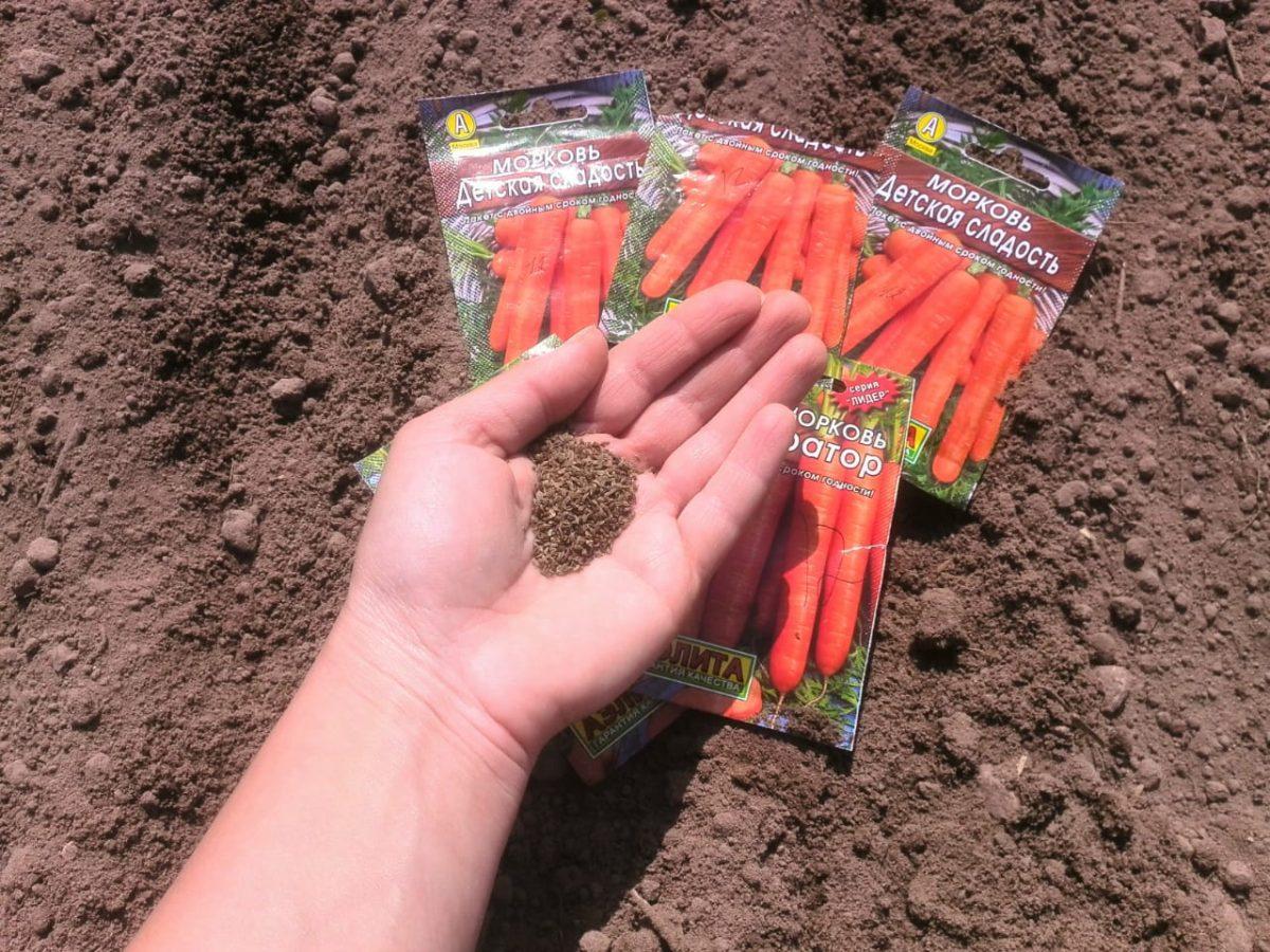 Сроки и правила посадки моркови под зиму, какой сорт лучше выбрать