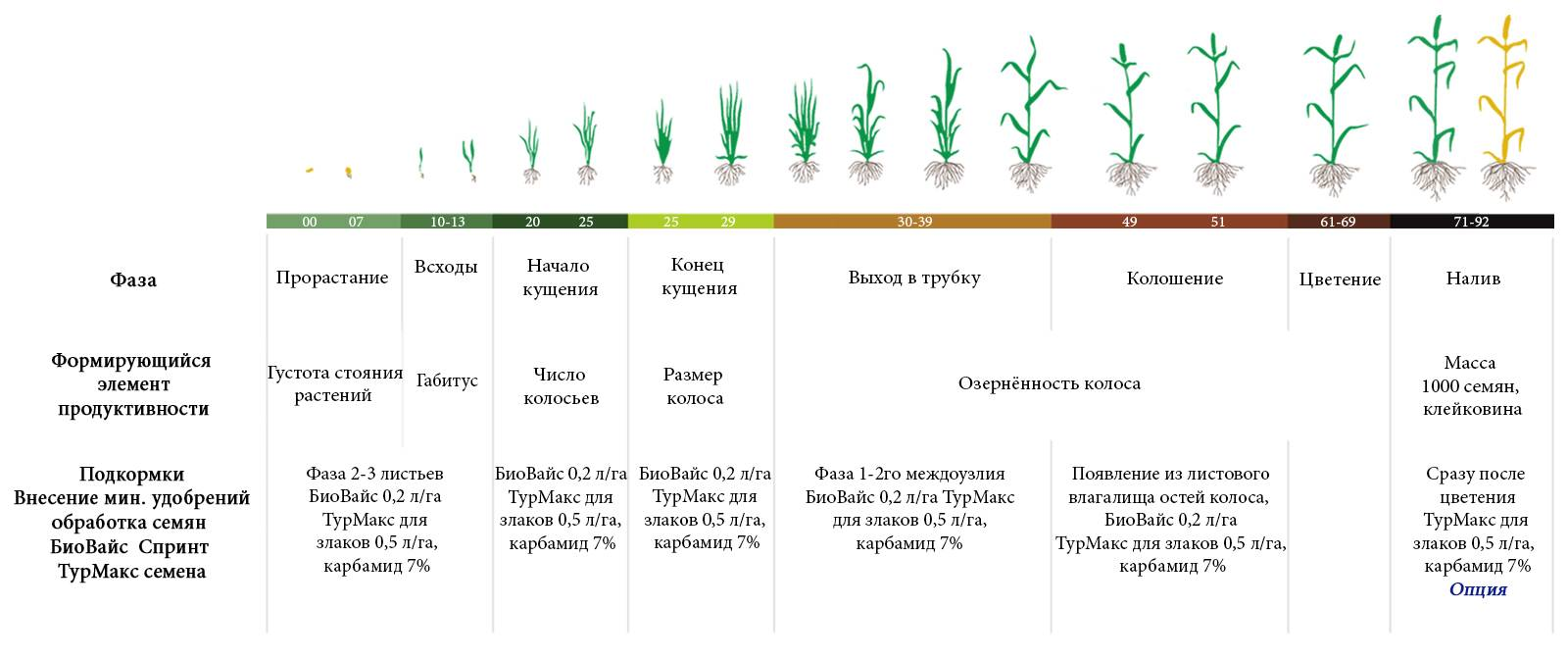 Как вырастить колоновидный персик: посадка колоновидного персика осенью или весной для новичков, уход, как обрезать