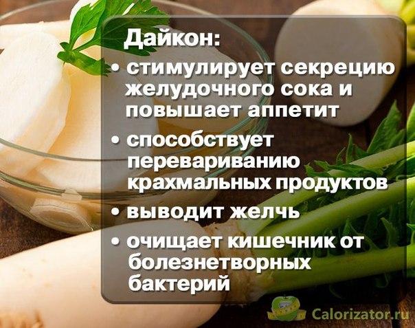 Дайкон – калорийность, полезные свойства, вред и противопоказания к употреблению